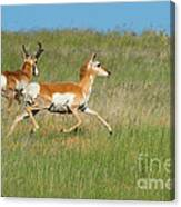 Separate Ways Canvas Print