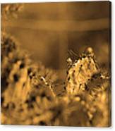 Sepia Cacti Close Up Canvas Print