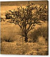 Sepia Cacti Roadside Canvas Print