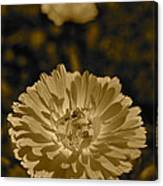 Sepia Flowers Canvas Print
