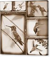Sepia Hummingbird Collage Canvas Print