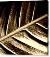Sepia Leaf Canvas Print