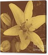 Sepia Lily Canvas Print