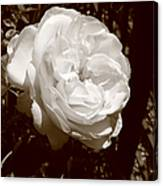 Sepia Rose Canvas Print