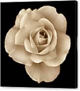 Sepia Rose Flower Portrait Canvas Print