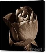 Sepia Rose Portrait 2 Canvas Print