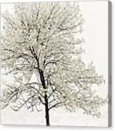 Sepia Square Tree Canvas Print