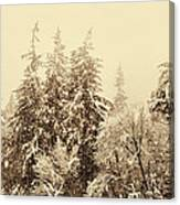 Sepia Winter Landscape Canvas Print
