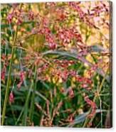 September Grasses Canvas Print