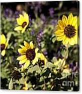 September Yellow Canvas Print
