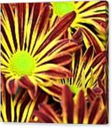 September's Radiance In A Flower Canvas Print