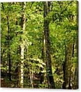 September's Woodlands Canvas Print