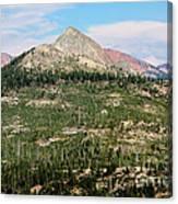 Sequoi National Park Canvas Print