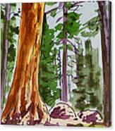 Sequoia Park - California Sketchbook Project  Canvas Print