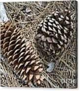 Sequoia Pine Cones Canvas Print