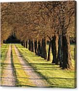 Serene Lane Canvas Print