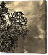 Serene Moment  Canvas Print