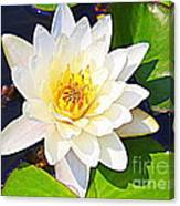 Serenity In White - Water Lily Canvas Print
