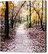 Serenity Walk In The Woods Canvas Print