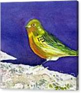 Serinus  Canaria  Aka The Canary Canvas Print