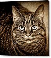Serious Tabby Cat Canvas Print