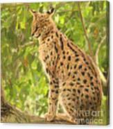 Serval Leptailurus Serval Canvas Print