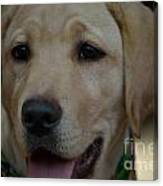 Service Dog In The Making Canvas Print