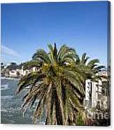 Sestri Levante And Palm Tree Canvas Print
