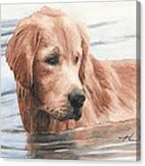 Setter Dog In Water Watercolor Portrait Canvas Print