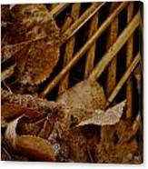 Settled Leaves  Canvas Print