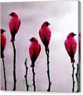 Seven Birds Of Red Canvas Print