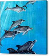 Seven Dolphins Canvas Print