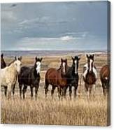 Seven Horses On The Range Canvas Print