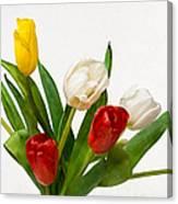 Seven Tulips - Four Colors Canvas Print