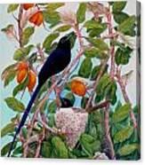 Seychelles Paradise Flycatcher Canvas Print