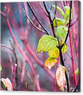 Shades Of Autumn - Reds And Greens Canvas Print