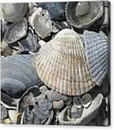 Shades Of Blue Shells Canvas Print