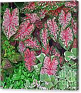 Shades Of Pink And Green And A Hint Of Purple Canvas Print