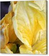 Shades Of Yellow Canvas Print