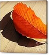 Shadow Cast By Leaf Canvas Print
