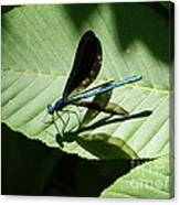 Shadow Fly Canvas Print