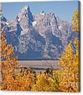 Shadow Mountain Grand Teton National Park Canvas Print
