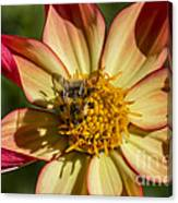 Shadow Of A Bee Canvas Print