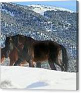 Shadow Stallion Of The Great Basin  Canvas Print
