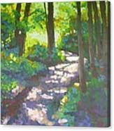 Shadowed Path Canvas Print