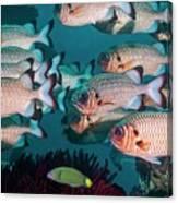 Shadowfin Soldierfish Canvas Print