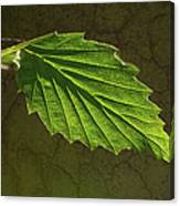 Shadows And Light Of The Leaf Canvas Print