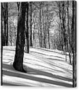 Shadows At Mccauley Mountain Canvas Print
