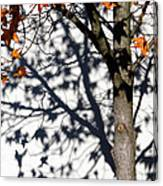 Shadows Of Fall Canvas Print