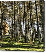Shadows Of The Larch Forest Sunset No2 Canvas Print